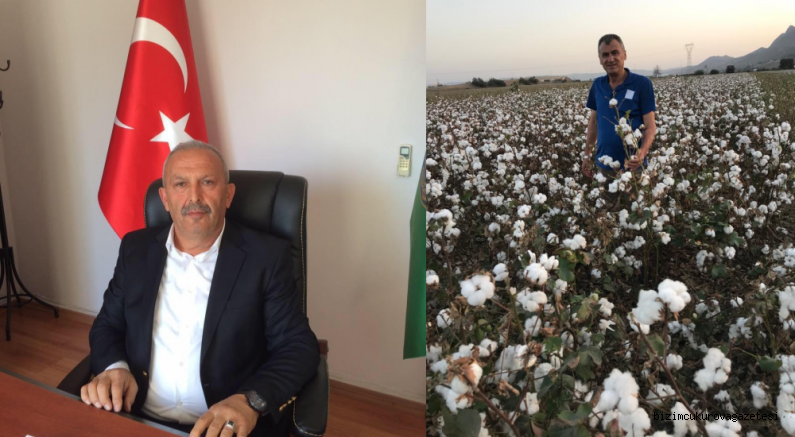 Çukurova çiftçisi son bir kaç yıldır kütlü pamuk ekiminde zarar ediyor…